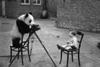 dianafotografando