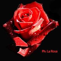Marco_La_Rosa