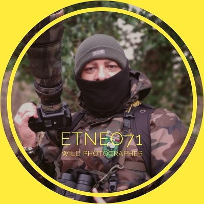 Etneo71